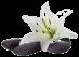 Vign_galet_fleur_transparent